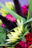 Ramalhete lindo do jardim da queda Imagem de Stock Royalty Free