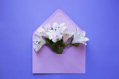 Ramalhete macio bonito do Alstroemeria no envelope no CCB azul Imagens de Stock