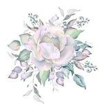 Ramalhete nevado das rosas brancas da aquarela imagem de stock