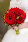 Ramalhete nupcial vermelho nas mãos de Imagens de Stock Royalty Free