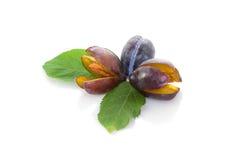 Ramalhete pequeno do fruto da ameixa Imagem de Stock Royalty Free