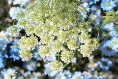 Ramalhete real das flores fotografia de stock