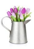 Ramalhete roxo da tulipa na lata molhando Fotos de Stock