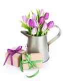 Ramalhete roxo da tulipa na lata molhando e nos presentes Fotografia de Stock Royalty Free