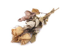 Ramalhete secado das rosas Fotografia de Stock