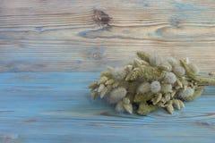 Ramalhete seco velho do ovatus de Lagurus e do Poaceae de Briza na tabela de madeira azul Fundo do estilo do vintage Herbário Bac imagens de stock royalty free
