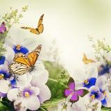Ramalhete surpreendente de violetas da mola imagens de stock royalty free