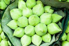 Ramalhete verde do botão de Lotus Foto de Stock Royalty Free