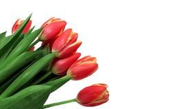 Ramalhete vermelho do Tulip Fotografia de Stock Royalty Free