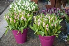 Ramalhetes cor-de-rosa e brancos das tulipas no florista Imagem de Stock Royalty Free