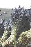 Ramalhetes da alfazema secada perfumada fotos de stock