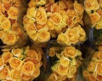 Ramalhetes da begónia amarela Foto de Stock