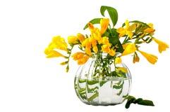 Ramalhetes das flores Apenas chovido sobre beleza Fotos de Stock Royalty Free