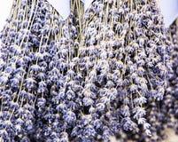Ramalhetes de suspensão de flores da alfazema Fotografia de Stock