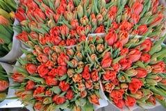 Ramalhetes das tulipas Fotografia de Stock
