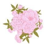 Ramalhetes florais da peônia Fotos de Stock
