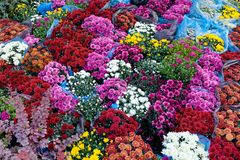 Ramalhetes loja da flor, loja do jardim Venda bonita da flora fotos de stock royalty free