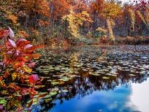 Ramapo湖,蓝色反射 库存图片