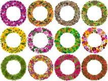 Ramar från isolerade blommor Arkivfoton
