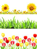 Ramar med blommor och grönt gräs Royaltyfri Fotografi