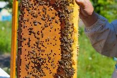 Ramar med celler i händerna av beekeepers Arkivfoto