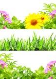 Ramar med sommarblommor och grönt gräs Fotografering för Bildbyråer