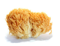 Ramaria aurea. Isolated on white background Stock Photos