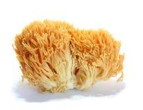 Ramaria aurea Stock Photos