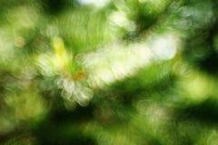 Ramas borrosas del pino Foto de archivo