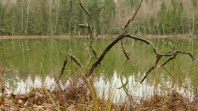 Ramas caidas en el lago verde D3ia del otoño Tiro liso del carro metrajes
