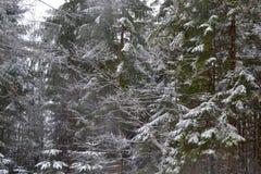 Ramas cargadas nieve Imagen de archivo libre de regalías