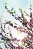 Ramas coloridas contra un cielo hermoso Foto de archivo