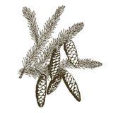 Ramas coníferas de árboles con los conos: pino, picea, abeto, cypr ilustración del vector