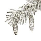 Ramas coníferas de árboles con los conos: pino, picea, abeto, cypr libre illustration