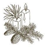 Ramas coníferas de árboles con los conos: pino, picea, abeto, cypr stock de ilustración
