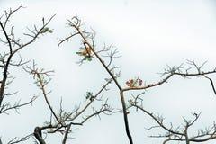Ramas con la flor y las hojas en el fondo blanco del cielo imagen de archivo