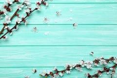 Ramas con las flores Fotos de archivo