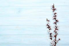 Ramas con las flores Imagen de archivo libre de regalías