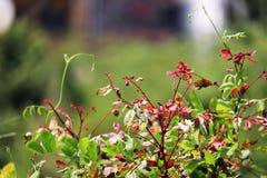 Ramas con las hojas coloridas Fotografía de archivo libre de regalías