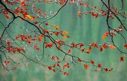 Ramas con las hojas de otoño sobre el río Fotografía de archivo