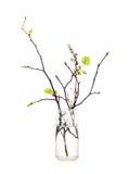 Ramas con las hojas florecientes en la botella fotografía de archivo