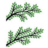 Ramas con las hojas verdes aisladas en el fondo blanco Foto de archivo libre de regalías