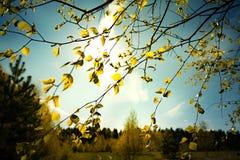 Ramas con las hojas verdes de los brotes el Sun con el cielo azul Imagen de archivo