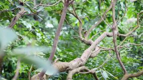 Ramas con las hojas verdes en jardín botánico almacen de metraje de vídeo