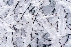 Ramas congeladas Foto de archivo libre de regalías