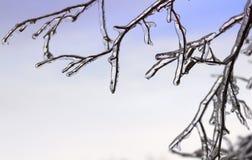 Ramas congeladas Imagen de archivo libre de regalías