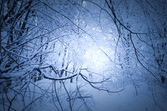 Ramas congeladas con nieve en bosque en invierno Fotografía de archivo