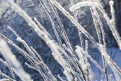 Ramas congeladas cubiertas con helada Imagen de archivo