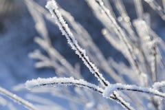 Ramas congeladas cubiertas con helada Imagenes de archivo