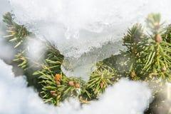 Ramas congeladas del abeto Imágenes de archivo libres de regalías